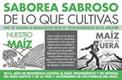 Widerstand gegen Genmais in ganz Mexico