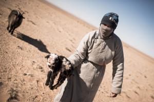 Tiere sterben jung in der Mongolei - dank Areva im Mai 2015