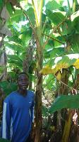 Plantage in Kenia