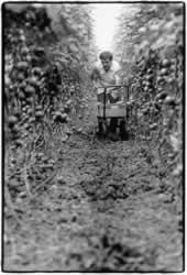 Bittere Ernte – Die moderne Sklaverei in der industriellen Landwirtschaft Europas